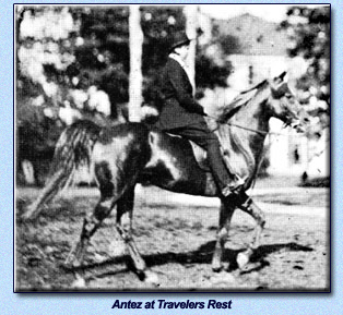 Antez under saddle at Travelers Rest