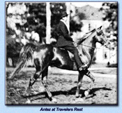 Click to view larger image of Antez under saddle at Travelers Rest (86880 bytes)