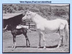 *Bint Rajwa with Foal