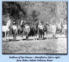 Joon and other stallions at San Simeon