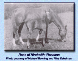 Rose of Hind with *Rossana as a foal